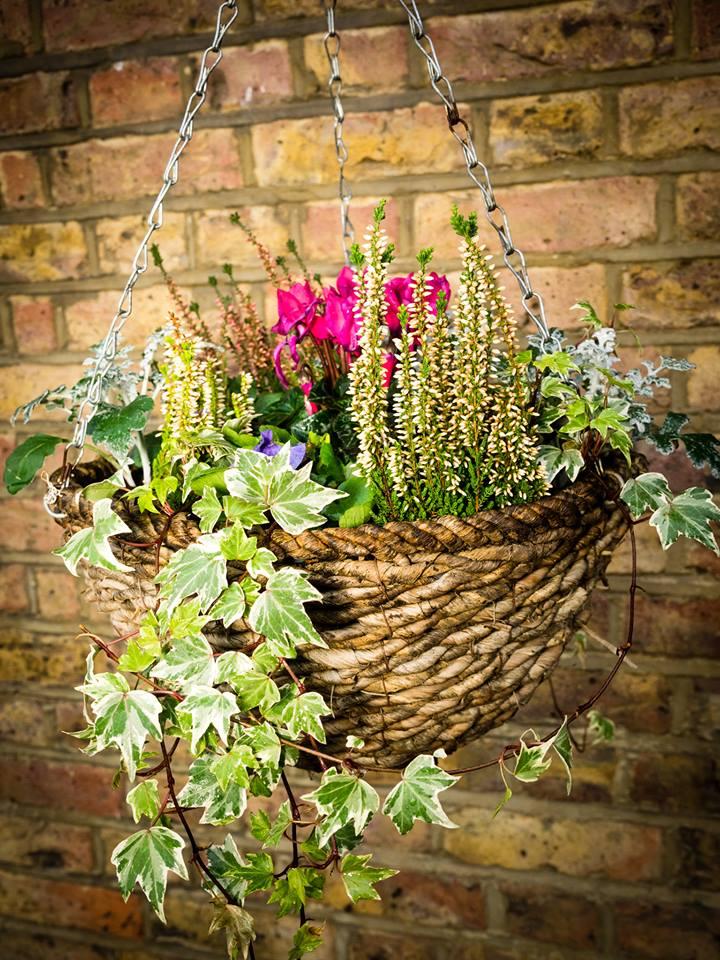Hanging Flower Baskets Winter : Winter hanging basket the helpful gardener